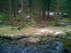 ForestSnowStream